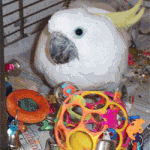 Parrot Care Tips - Creating a Stress-Free Environment For Your Bird