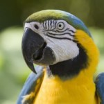 Parrot Care and Behavior