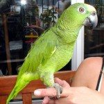 The Ultimate Parrot Care Guide
